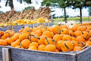 Green Thanksgiving Farmers Market